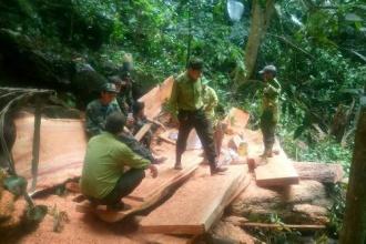 Phát hiện, bắt giữ đối tượng khai thác gỗ trái phép tại Thượng Hóa